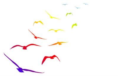 Vinilo Gabbiani, volare, volo, arcobaleno, ritmo