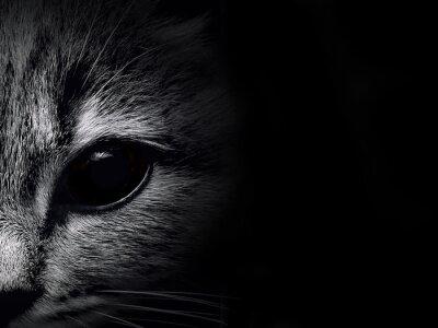 Vinilo gato hocico oscuro primer plano. vista frontal