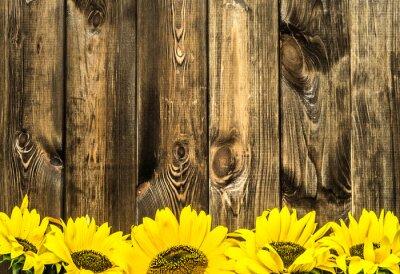 Vinilo Girasoles en tablas de madera viejas. Flores de fondo con copia espacio