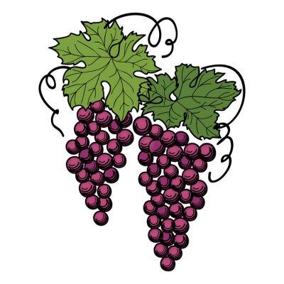 Vinilo Grabar uvas en la rama sobre fondo blanco