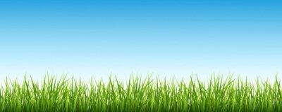 Vinilo Grass y el cielo