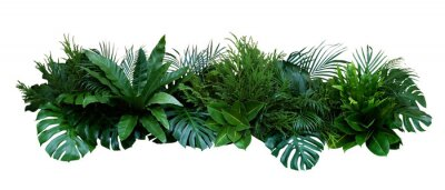 Vinilo Green leaves of tropical plants bush (Monstera, palm, rubber plant, pine, bird's nest fern) floral arrangement indoors garden nature backdrop isolated on white background, clipping path included.