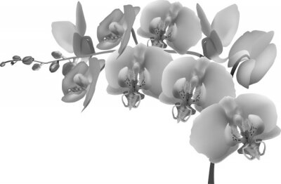 Vinilo gris ramificación de la orquídea en el fondo blanco