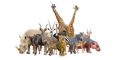 Vinilo grupo de animales áfrica