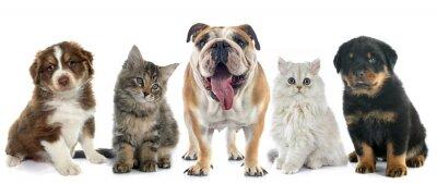 Vinilo Grupo de mascota