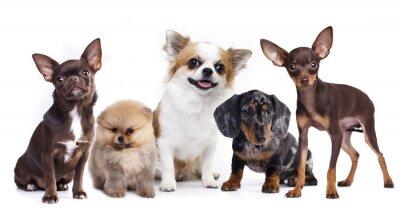 Vinilo Grupo de pequeños compañeros decorativos perro