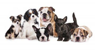 Vinilo Grupo de perritos sentado delante de un fondo blanco