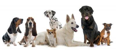 Vinilo Grupo de perros