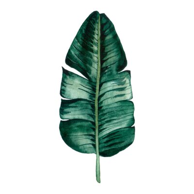 Vinilo Hand drawn watercolor tropical plants set. Exotic palm leaves, jungle tree, brazil tropic botany elements.