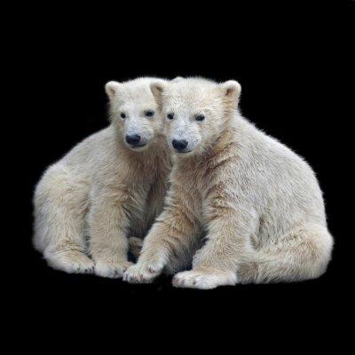 Vinilo Hermandad de cachorros de oso polar