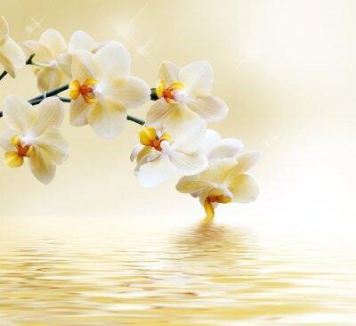 Vinilo Hermosa orquídea blanca