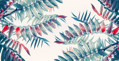 Vinilo Hermosas hojas tropicales de fondo, banner