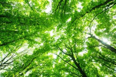 Vinilo Hermoso bosque verde