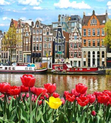 Vinilo Hermoso paisaje con los tulipanes y casas en Amsterdam, Holanda