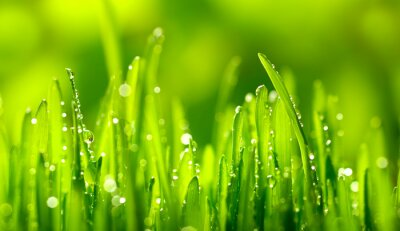 Vinilo Hierba Verde