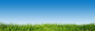 Vinilo Hierba verde en el cielo azul claro, tema de la naturaleza de la primavera. Panorama