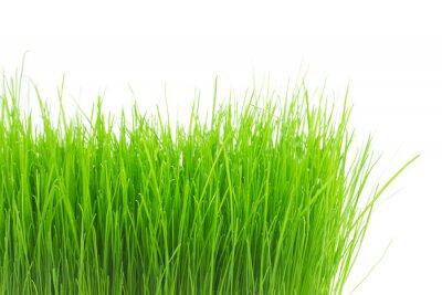 Vinilo Hierba verde fresca