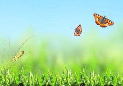 Vinilo Hierba verde, oruga y mariposa