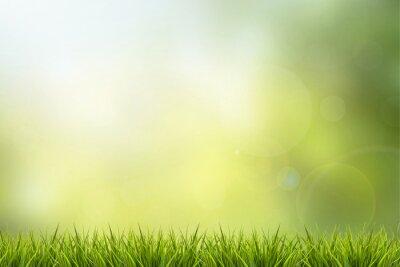 Vinilo Hierba y la naturaleza verde fondo borroso