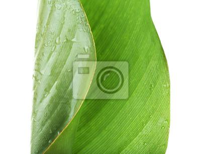 Vinilo Hoja verde fresca con gotas sobre fondo blanco
