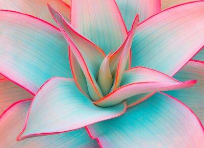 Vinilo Hojas de agave en colores pastel modernos para fondos de diseño