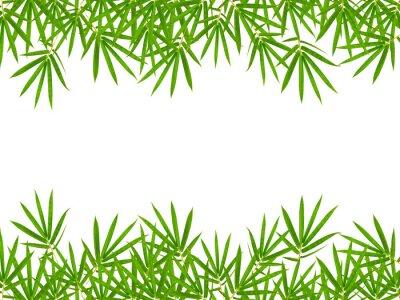Vinilo hojas de bambú aisladas sobre fondo blanco
