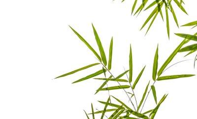 Vinilo hojas de bambú aisladas sobre fondo blanco, camino de recortes incluyendo