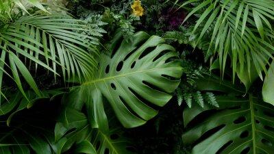 Vinilo Hojas verdes tropicales Fondo de telón de fondo Monstera, Palma, helecho y plantas ornamentales telón de fondo