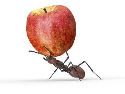 Vinilo Hormiga está levantando una manzana aislada en un blanco