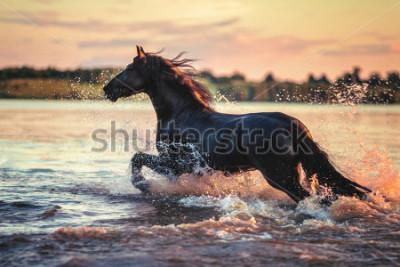 Vinilo Horse