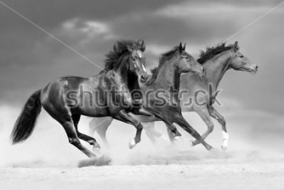 Vinilo Horse herd run in dust