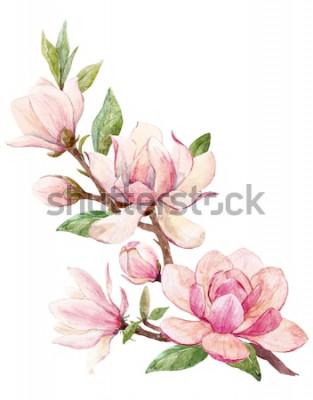 Vinilo Ilustración acuarela de una rama con flores rosa tarjeta de primavera de flor de Magnolia