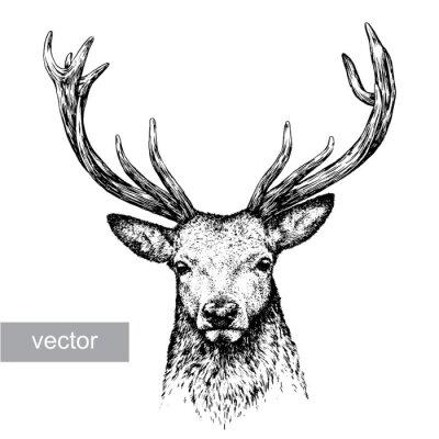 Vinilo Ilustración de ciervo grabado