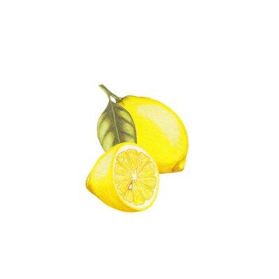 Vinilo Ilustración de limón