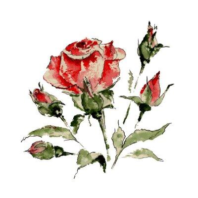 Vinilo Ilustración de rosa roja