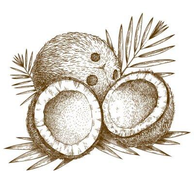 Vinilo ilustración grabado de coco y hojas de palmeras