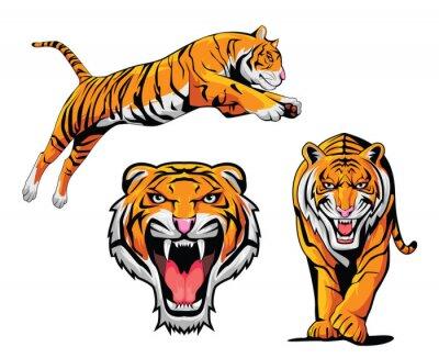 Vinilo Ilustración Tiger Set