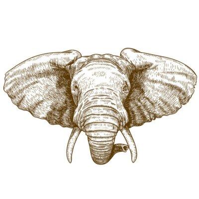Vinilo ilustración vectorial de cabeza de elefante grabado