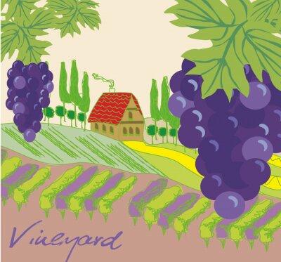 Vinilo Ilustración vectorial de viñedo