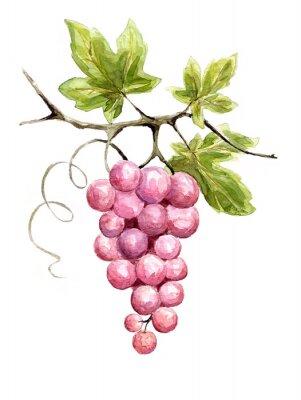Vinilo Ilustración - vid