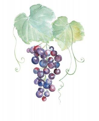 Vinilo Ilustraciones dibujadas a mano de la acuarela de uvas púrpuras