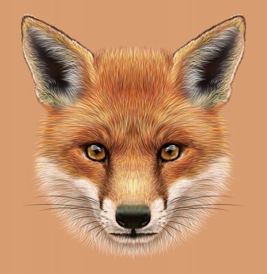 Vinilo Ilustrativo Retrato de un zorro rojo. La cara mullida linda de Fox del bosque.