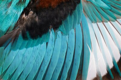 Vinilo Imagen de las alas del martín pescador blanco-throated en un fondo blanco. Pájaro. Animal.