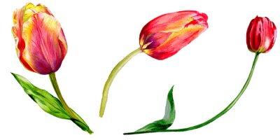 Vinilo Increíble flor de tulipán rojo con hoja verde. Dibujado a mano aislado flor botánica.