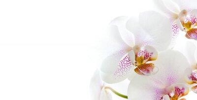 Vinilo isolierte Orchideenblüten