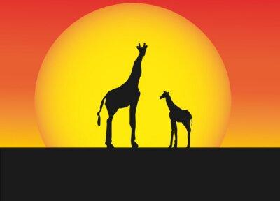 Vinilo Jirafas africanos en el paisaje de la silueta