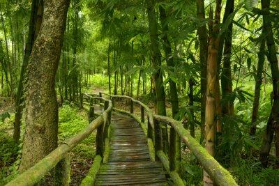 Vinilo Jungla de Tailandia con puente de madera