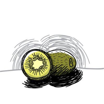 Vinilo Kiwi con la mano de tinta dibujado a Vector ilustración