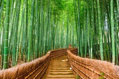 Vinilo Kyoto, Japón Bosque de bambú