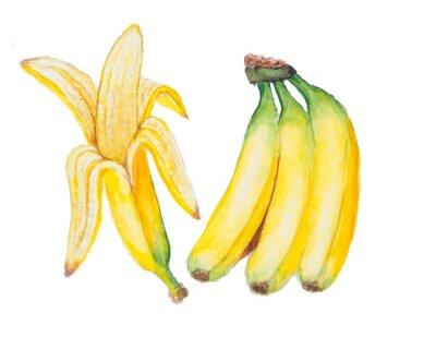 Vinilo La acuarela Plátano aislado en el fondo blanco